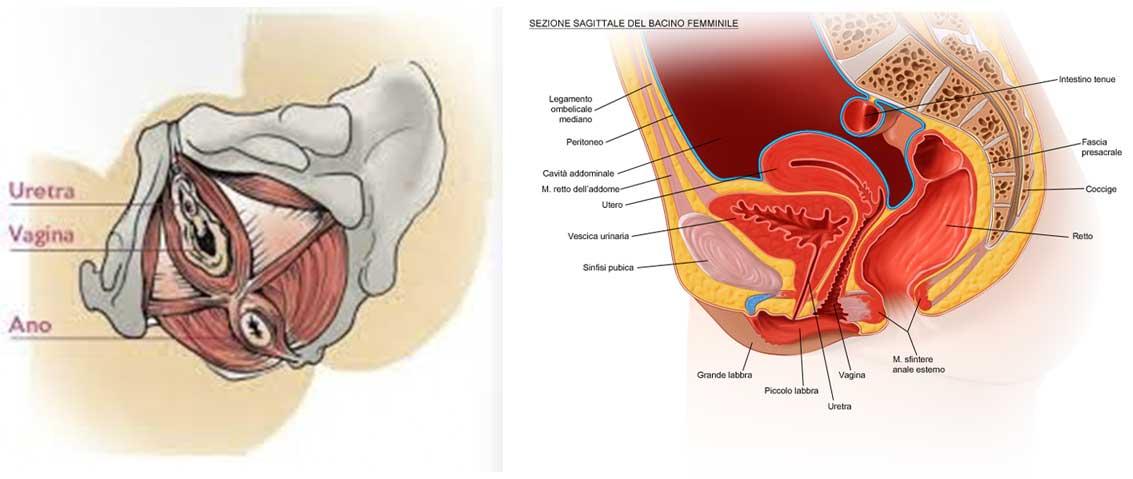 dolore pelvico e sfintere anale